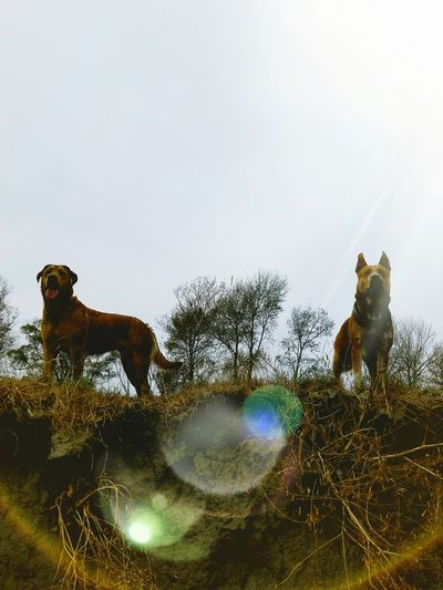 Adventure Buddies Adventure Dogs Brave Dogs Hunting Dogs Protecting Dogs Wild Dogs Pet Portraits