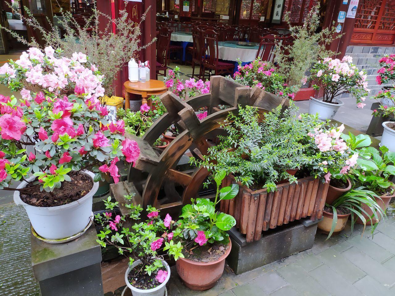 POTTED PLANTS FOR SALE AT FLOWER SHOP