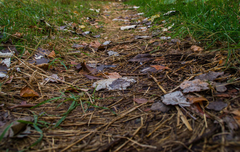 Dry leaves in autumn colors on the ground Land Nature Plant Part Leaf Dry Day No People Grass Falling Selective Focus Growth Forest Fragility Autumn