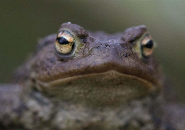 Toad UnderSea