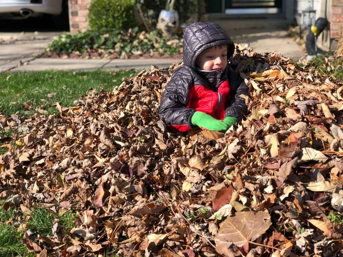 Boy sits in a pile of leafs fall season Mixed Race Caucasian Asian  Fallen Leaf Pile Of Leaves Fall Childhood Child Real People One Person Day Nature Clothing Plant Baby Field Land Babyhood Innocence Leisure Activity Warm Clothing Hat Winter Young Outdoors