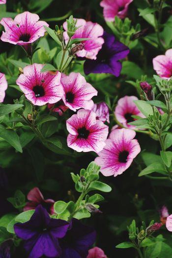 Flowers,Plants & Garden Summer Colors Colorful