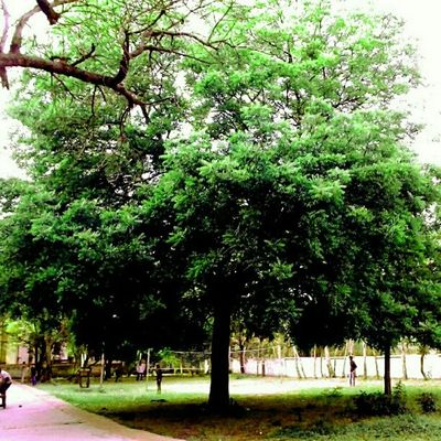 Tree Gmcs Old Boys Hostel Surat India Volleyball Court