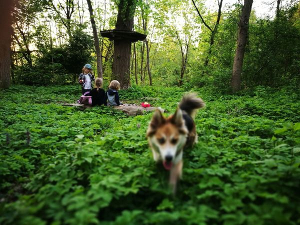 camping with a dog Nature Forest Kids Pets Togetherness Tree Dog Full Length Grass Plant Friend