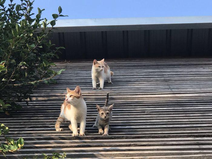 3cats Cats