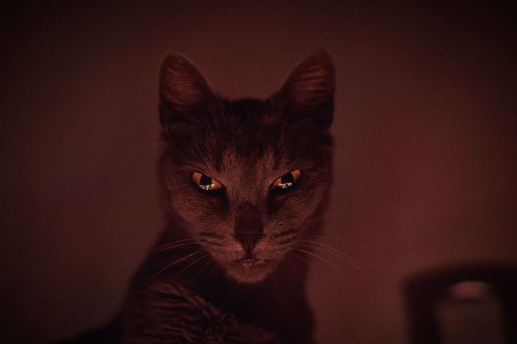 Cat Portrait Eyeem Cat Portraits Lowlightphotography Cat♡ Check This Out Illuminated Looking At Camera No People Sony A58 Light And Shadow