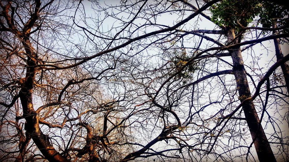 branches here can be related to path to successTree Branch Beauty In Nature Nature Naturelovers Nature_perfection Nature Photography