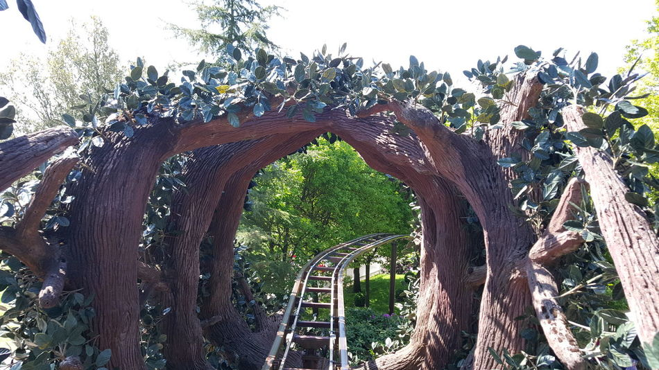 Need For Speed AltonTowers Cbeebies Rides Alton Towers Merlin Group Tree Top Adventure Fairground Attraction Fairground Ride Fairground