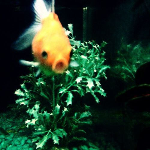 Smile LOL Orange Fish Water Green Plant Hotel Nanpara Nepal Border Aquarium Fishporn Aquaria Moment Abstract Animal Lover Samsung 5 Megapixels Fishkeeping Fishaddict Fishofinstagram Beauty