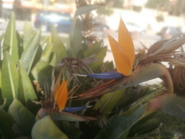 Leaf Growth Plant Flower No People Nature Close-up Beauty In Nature Day Outdoors Flower Head Freshness