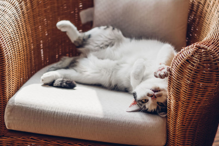Cat sleeping on armchair at home