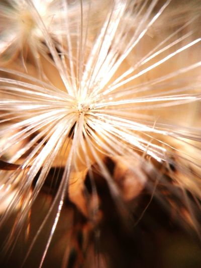 Semilla lista para viajar EyeEm Selects Flower Flower Head Full Frame Close-up Pollen Pollen Sunflower The Great Outdoors - 2018 EyeEm Awards EyeEmNewHere The Creative - 2018 EyeEm Awards