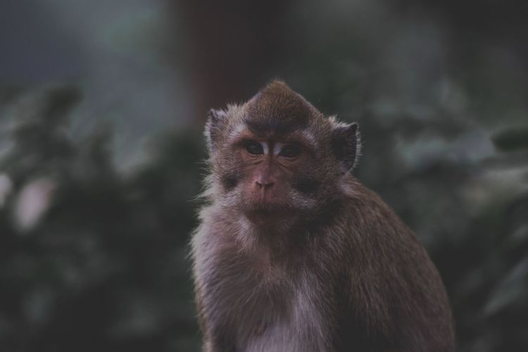 Looking at lens Tropical Moody Nature Moody Monkey Wild Animal Animal Wildlife One Animal Animals In The Wild Primate Focus On Foreground Vertebrate Mammal