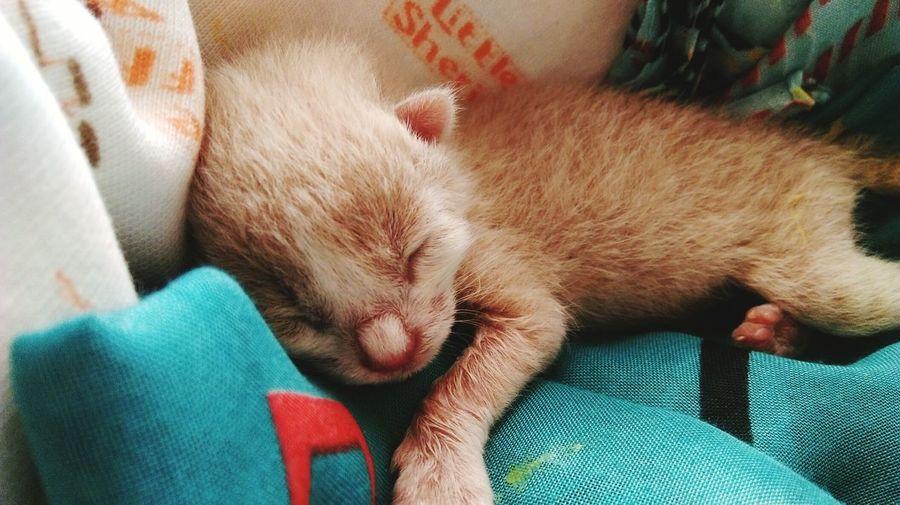 Close-up of kitten sleeping on pet bed