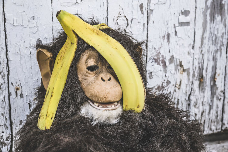 Close-Up Of Banana Peel On Monkey Statue