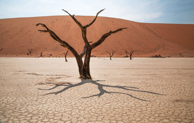 Africa African Beauty Arid Climate Aridity Bare Tree Color Day Desert Dunescape Dusty Footsteps In The Sand High Angle View Namibia Namibia Landscape Nature Outdoors Sand Shadows & Lights Solitude Sossusvlei Desert - Namibia Tranquility Travel Destinations Tree Trees And Sky Yellow