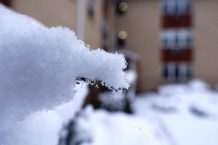 Snow sugar Snow
