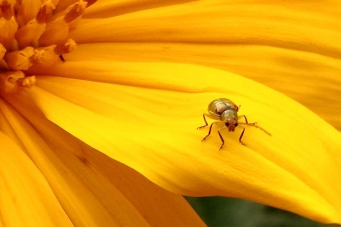 Flower Head Flower Yellow Beauty Insect Petal Day Lily Close-up Animal Themes