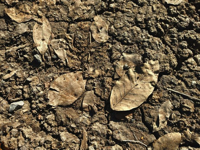 dirt leaf soil Soil On The Ground Rotten Leaves Dirt Backgrounds Sand Full Frame Textured  Pattern Sunlight High Angle View Close-up FootPrint Surface Dried Dry Dried Plant Leaves Dead Plant Stone - Object Paw Print Clear Wilted Plant Wilted Track - Imprint