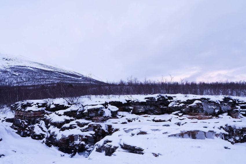 Abisko Dusk Forest Landscape Lapland Mountain Nature Snow Trees Winter