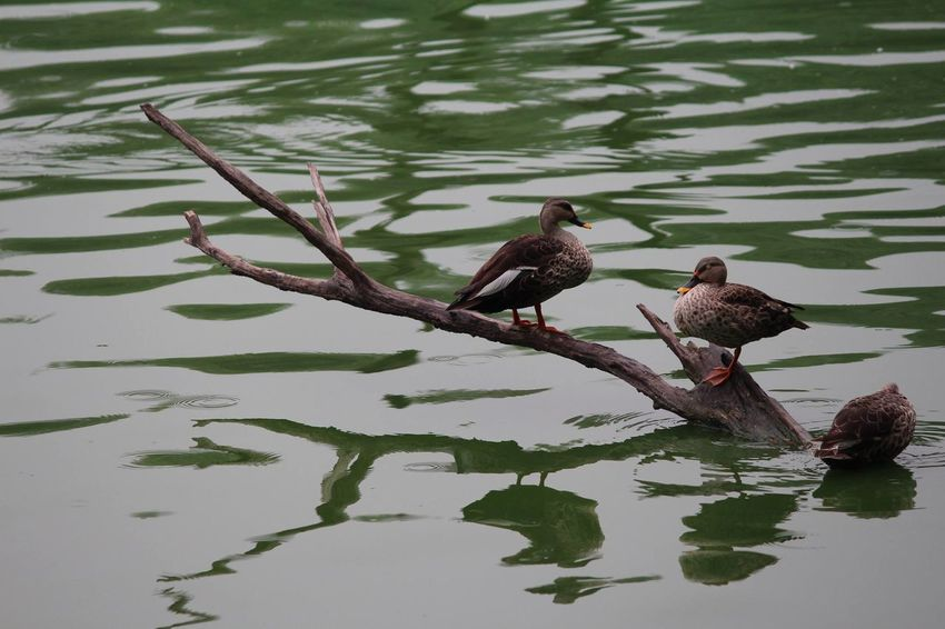 Animals In The Wild Beauty In Nature Bird Deerpark Delhi Delhidiaries Greenpark Lake No People Outdoors Reflection