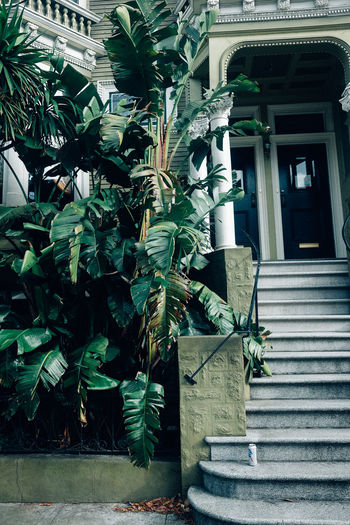 Green Color Architecture Building Exterior Green Color Growth House Leaf Nature Outdoors Plant