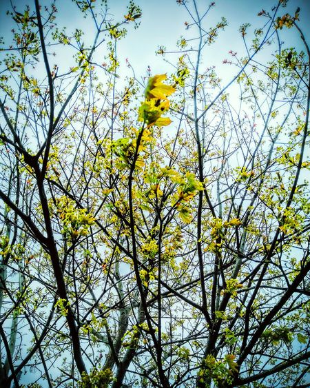 Trees in summer Trees And Sky Leaf Colors Amateur Photography Taking Photos Branches And Leaves Full Blossom Check This Out Beauty In Nature