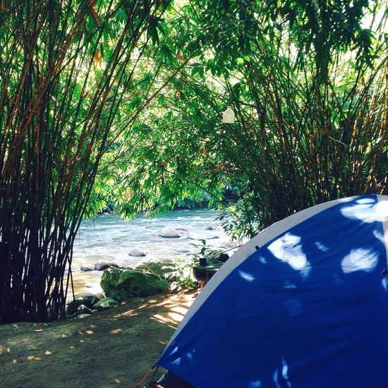 river camp side Beach Beauty In Nature Day Grass Growth Nature No People Outdoors Sea Shadow Sunlight Tree Water