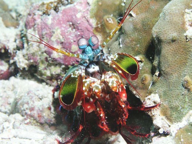 Crazy Animals  Unterwasserwelt Maldives Diver Underwaterlife Tauchgang Unterwasser Underwater Photography Tauchspot Diving Malediven  Maledives Coral Reef Coral Reefs Unterwasserkamera Taucher