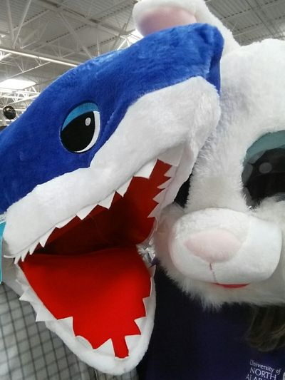 You Only Live Once Mask Plush Shark Bunny 🐰 Being Silly Fun Couple Fun Shark Indoors  No People Close-up Animal Themes Mammal Day