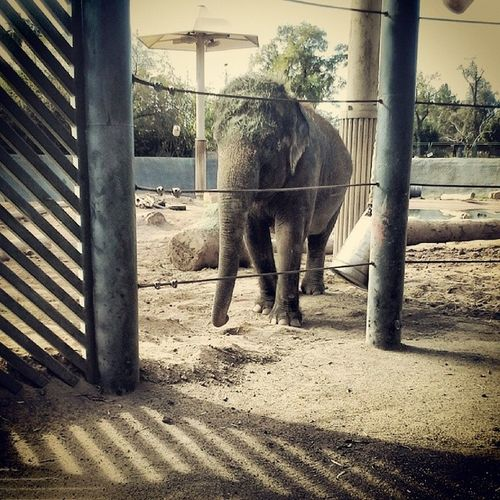 She pised for me :3 Mylove Elephants Ohmygawd