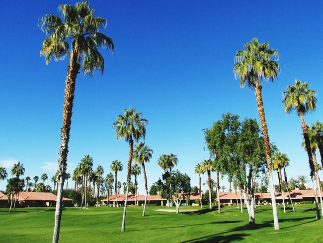 Landscape_photographyGolfing Palm Desert Palm Trees Fairway Golf#beauty#nature#photography#sky#blue#houses#trees#green#grassfunhappy [a:955220] Landscape Country Club LandScape_collection