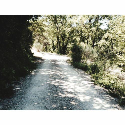 Continuez votre chemin, la vie continue. 🍃🍂 Chemin Photography Balade