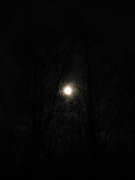 Astronomy Bare Tree Beauty In Nature Branch Bright Night Dark Full Moon Full Moon Haunted Haunted Woods Illuminated Low Angle View Moon Moon Surface Nature Night No People Outdoors Planetary Moon Silhouette Sky Sky And Clouds Star - Space Supermoon Tree