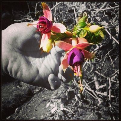 Flower Love Pax