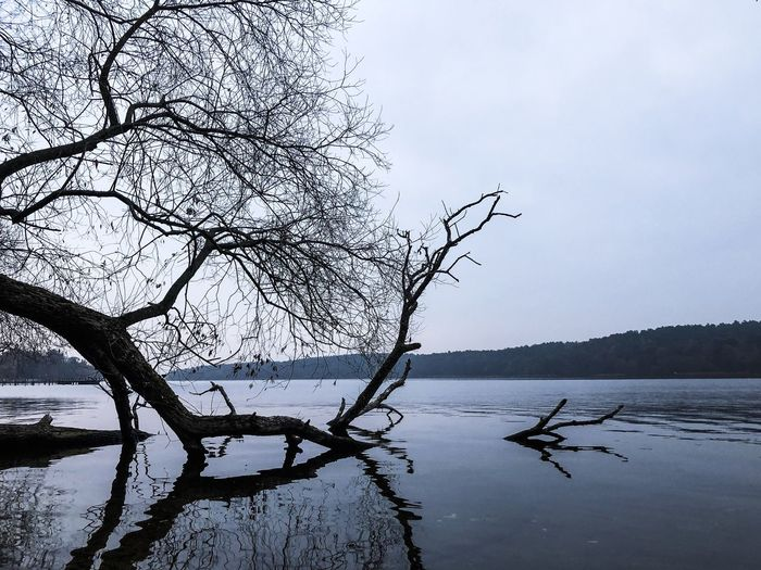 Tree in a lake Melancholy Melancholic Landscapes Mystic Outdoors Seasons Change Season  Autumn Branch Tree Bare Tree Water Sky Tranquility Branch Tranquil Scene Beauty In Nature Scenics - Nature Plant Nature Lake Non-urban Scene No People Trunk Day Tree Trunk Cloud - Sky Outdoors Dead Plant