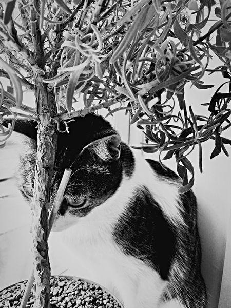 Black & White Window Black And White Blackandwhite Domestic Pets One Animal Tree Plant Domestic Cat Animal No People Cat Domestic Animals Animal Themes Animal Head