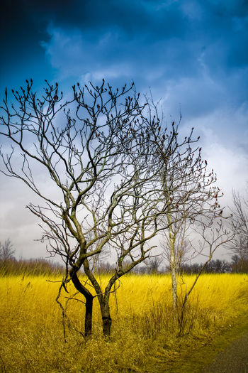 Lonely Tree Bare Tree Beauty In Nature Cloud - Sky Day Eye4photography  EyeEm Best Shots EyeEm Nature Lover EyeEmNewHere Field Grass Landscape Moon Nature Night No People Outdoors Silhouette Sky The Great Outdoors - 2017 EyeEm Awards Tree Tree Two People Yellow