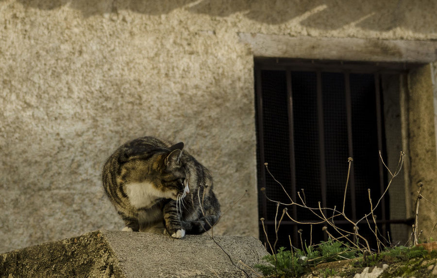 A street cat living in an old, abandoned building 20-85mm Animal Themes Barcelona Brown Cat Cat Hunting  Day Dilapidated Domestic Cat Hunter Mammal Nikon Nikon D7000 No People Outdoors Stalking Street Cat Streetphotography Tabby Tom Cat Tomcat