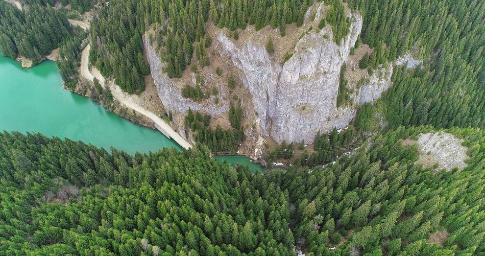 Aerial Photography Picea Abies Forest Photography Nature Photography EyeEmNewHere EyeEm Best Shots EyeEm EyeEm Nature Lover EyeEm Selects Forestphotography Forest Trees Lakeview Water High Angle View Field Grass Green Color