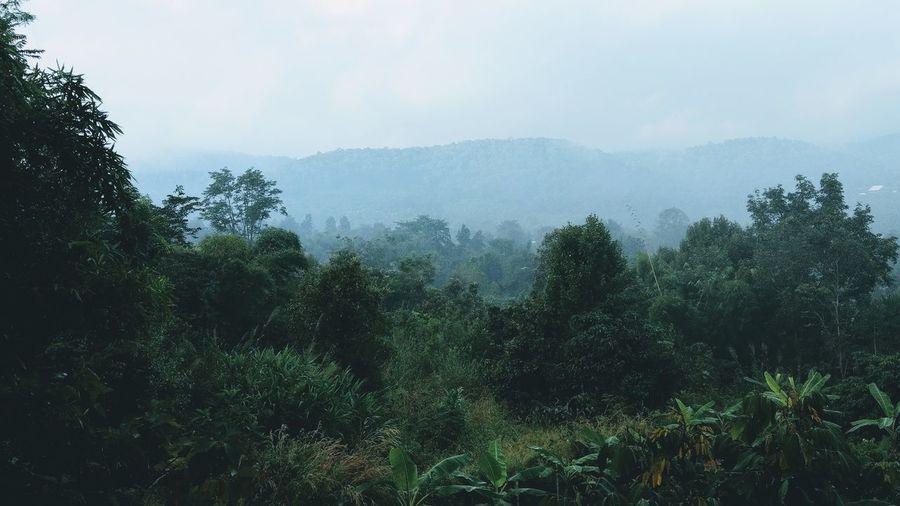 Tree Nature Fog