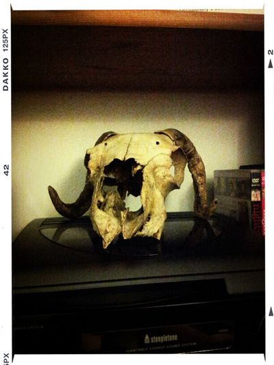 I Appear To Have Acquired A Goat Skull.