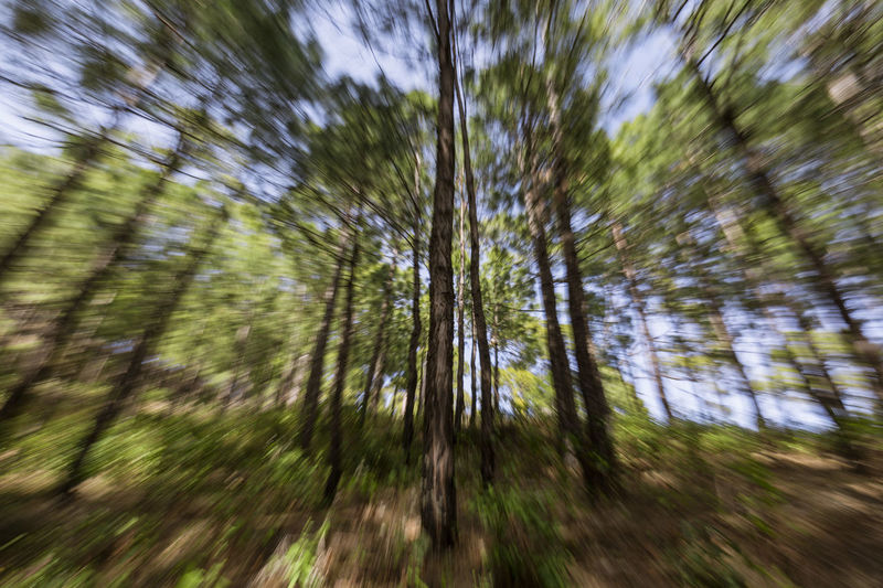 A daytime slow shutter zoom burst. Abstract Photography Creative Photography Creativity Zoom Burst Abstract Abstractart Beauty In Nature Burst Canon Photography Day Low Angle View Nature Outdoors Tree Visual Creativity