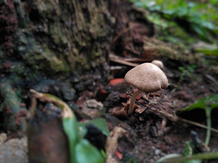 jamur Mushroom