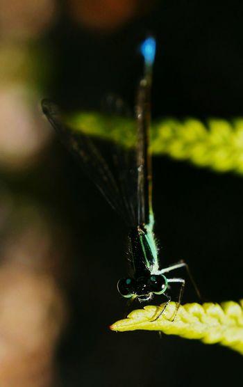 Taking Photos Libellule Photography Nature Sun Garden Shadow Green Macro Insect