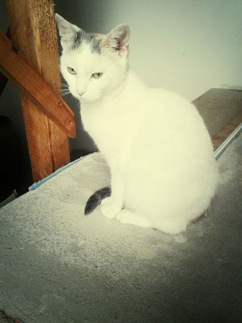 My Cat Forever♥