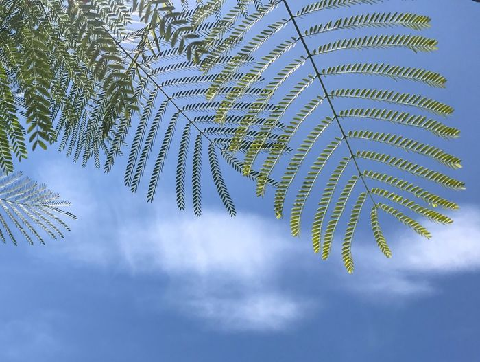Nature Leaf Beauty In Nature Day Growth Sky Tree No People Low Angle View Outdoors Scenics Freshness Close-up Outdoor Grass Green Color Nature