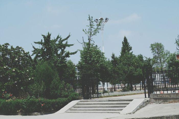 校园 Tree City Architecture