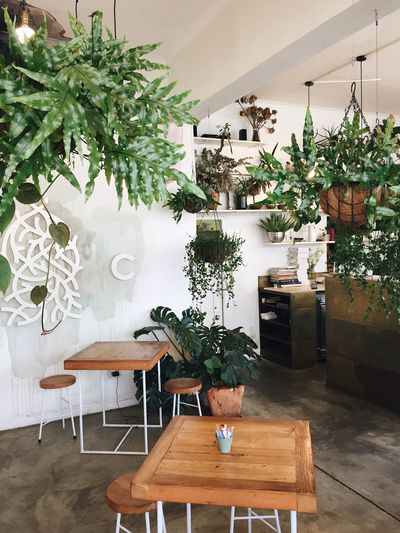 Potted plant on table in restaurant