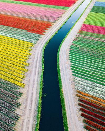 Tulip fields in